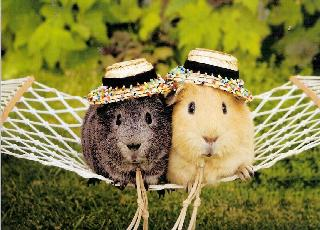Chú Gióng – Nơi rao vặt mua bán chuột lang đẹp giá rẻ hiện nay