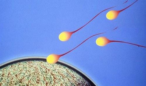 Tạo ra tinh binh từ tế bào da